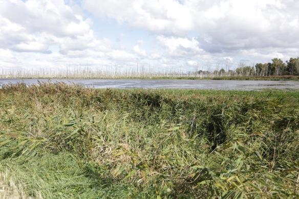 Wetland near Kamp on 4 October 2016