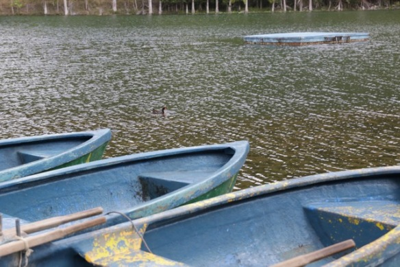 Rowing boats, 6 March 2017