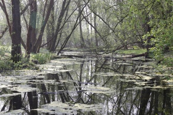 Esscheplaat water, 9 April 2017