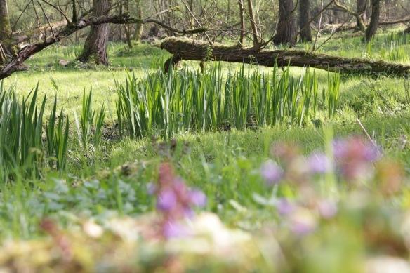 Esscheplaat willows, 9 April 2017