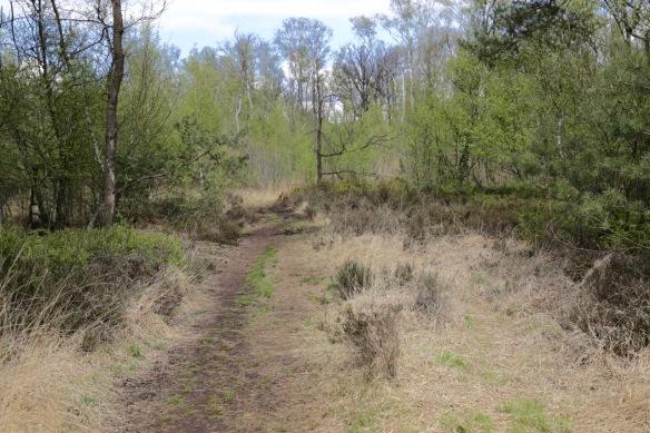 Meddose Veen trail, 26 April 2017
