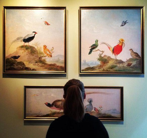 Feetless bird of paradise flying, by Schouman