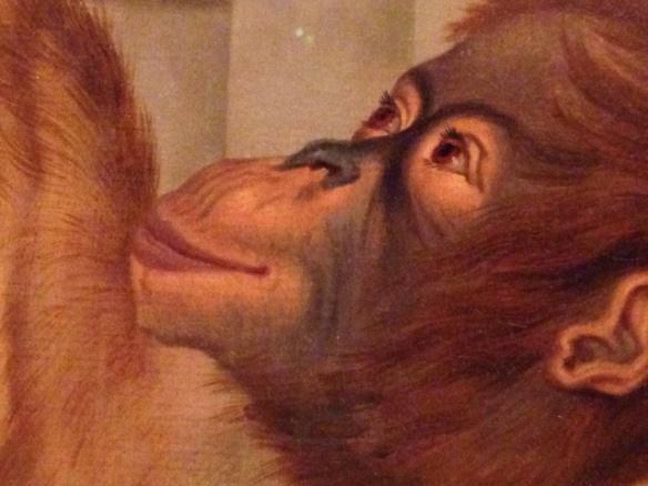 Orangutan detail, 24 June 2017
