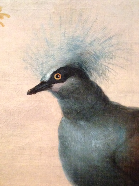 Southern crowned pigeon, 24 June 2017