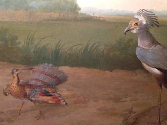 Sunbittern and secretary bird, 24 June 2017