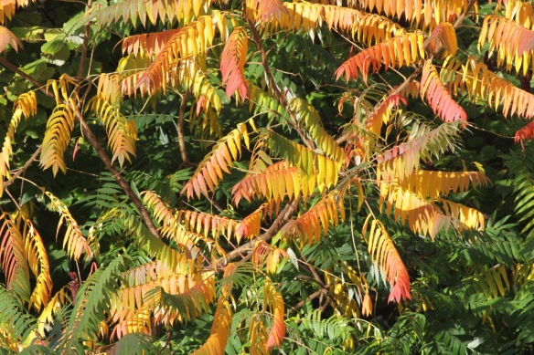 Autumn leaves, 30 October 2017