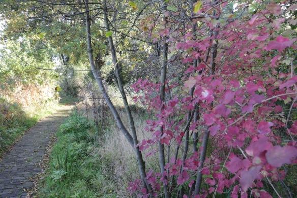 Heempark leaves, 14 October 2017