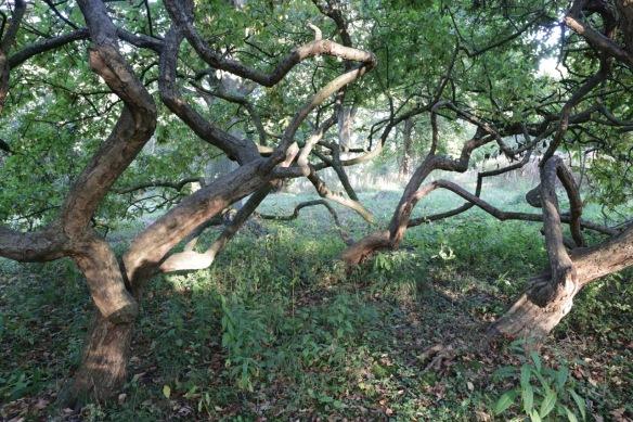 Trees, 14 October 2017