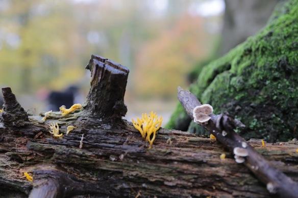 Fungi, 11 November 2017