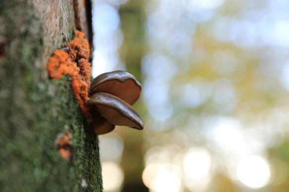 Fungi, on 12 November 2017