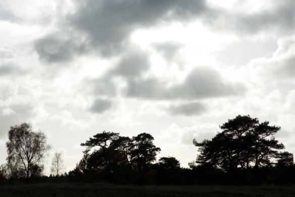 Kootwijkerzand trees, 13 November 2017
