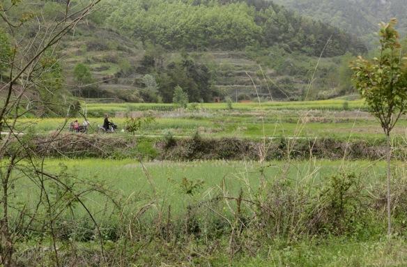 Yangxian fields, on 5 April 2018