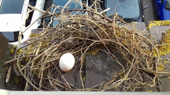 Voorschoten nest, 2018