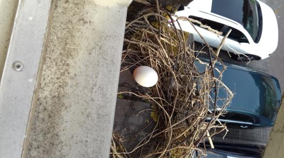 Voorschoten nest, in 2018