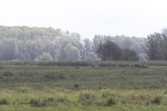 Lauwersmeer, 7 September 2018