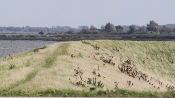 Lauwersmeer, on 7 September 2018