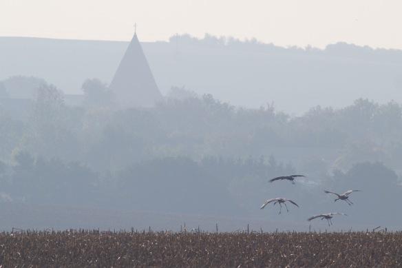 Cranes, 11 October 2018