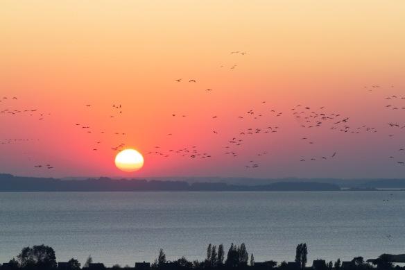 Cranes sunset, 11 October 2018