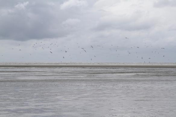 Engelsmanplaat birds, 8 September 2018