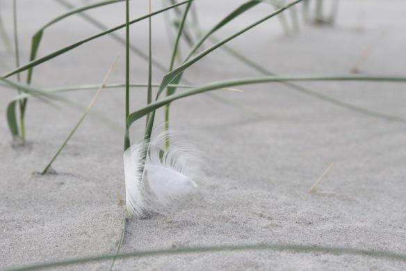 Het Rif feather close up, 8 September 2018