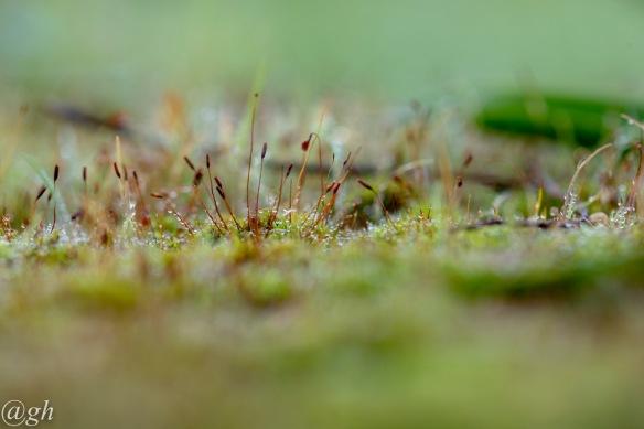 Moss, 4 November 2018