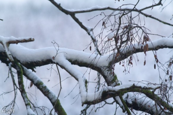 Branches and snow, 23 January 2019