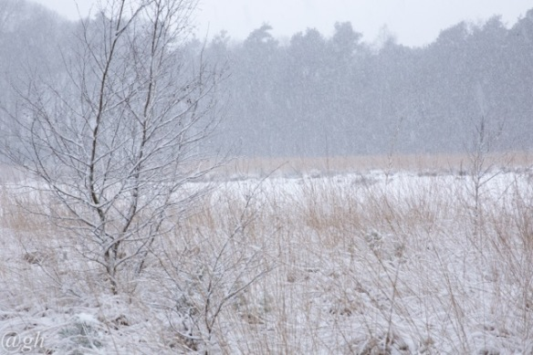 Frozen lake, snow, 22 January 2019