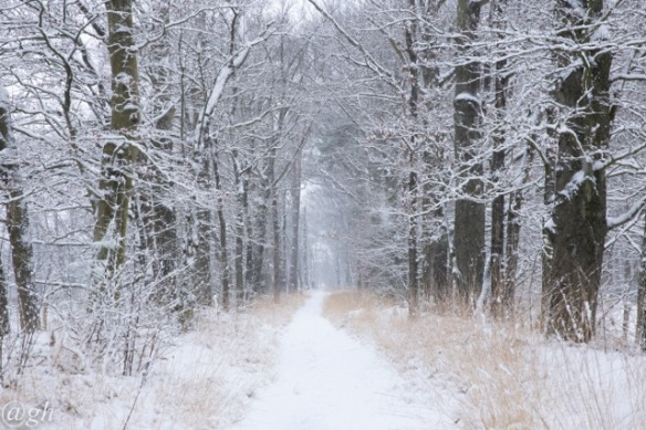 Snowy path, 22 January 2019