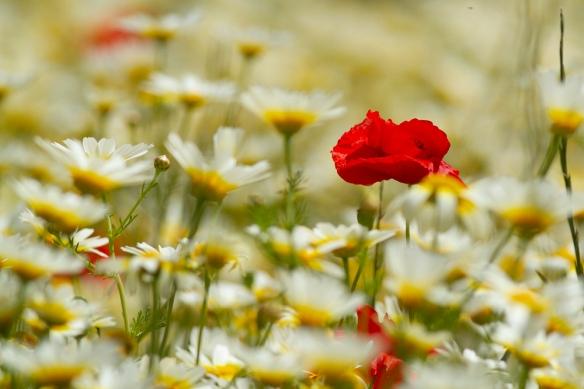 Flowers, 25 April 2019
