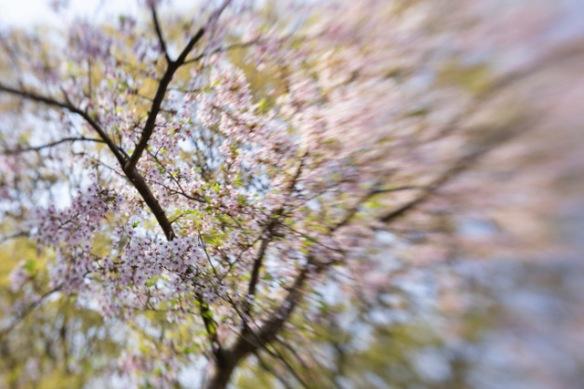 Japanese garden, 11 April 2019
