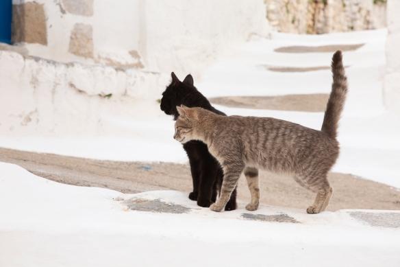Megalo Chorio, cats, 24 April 2019