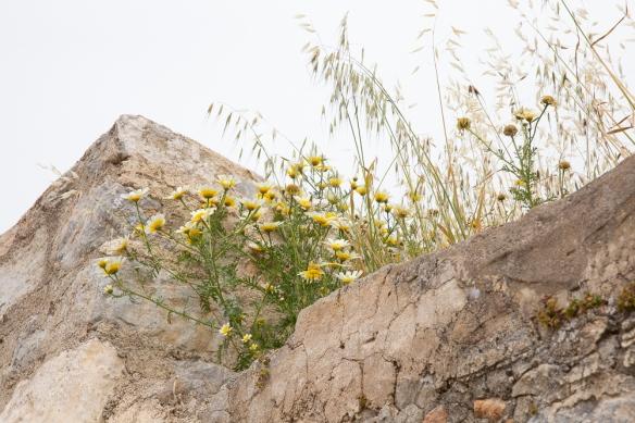 Megalo Chorio, flowers, 24 April 2019