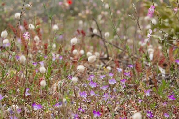 Purple flowers, 26 April 2019