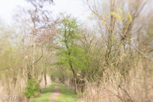 Trees, 6 April 2019