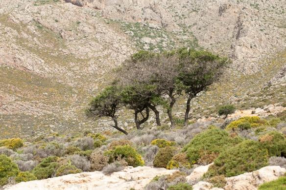 Trees, 6 May 2019