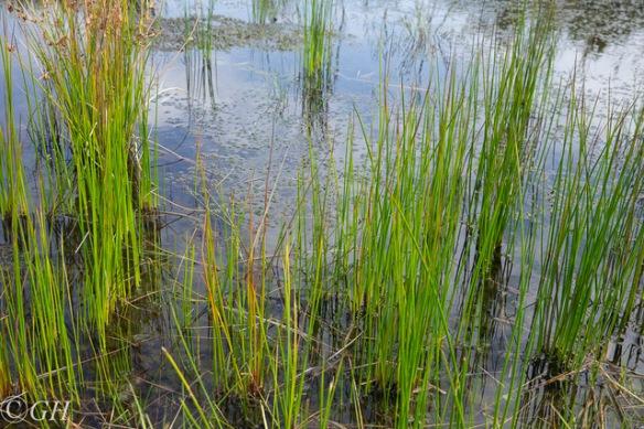 Naardermeer marsh plants, 19 August 2019