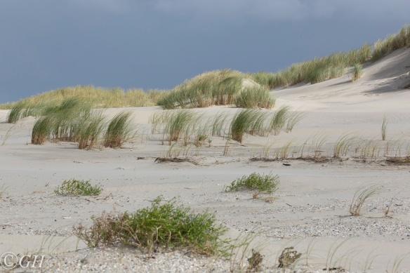 Dunes, Terschelling, 18 September 2019