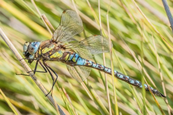 Migrant hawker male, 21 September 2019