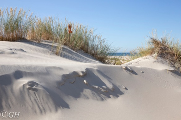 Sand dunes, Terschelling 21 September 2019