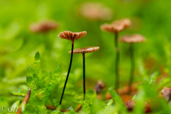 Pinwheel mushrooms, 25 September 2019
