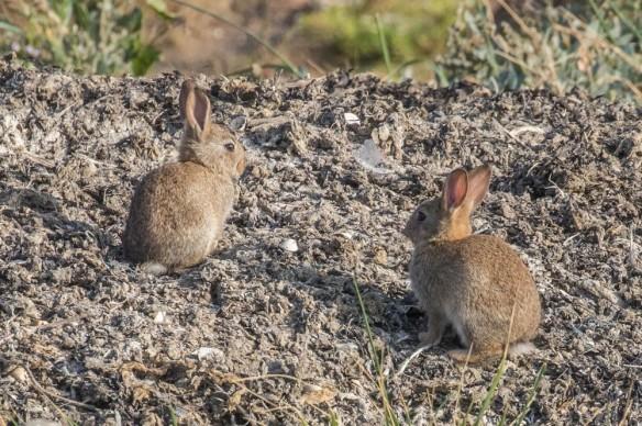 Rabbits, 22 September 2019