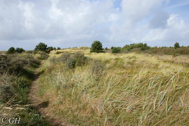 Sand dunes, 27 September 2019