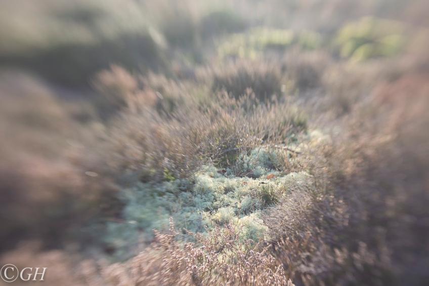 Lichen, Schoorl 19 Jadnuary 2020