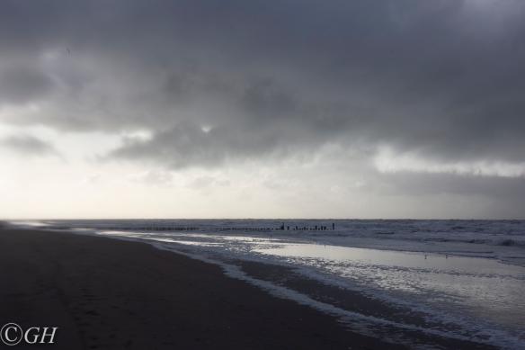 Sanderlings, Schoorl 18 January 2020