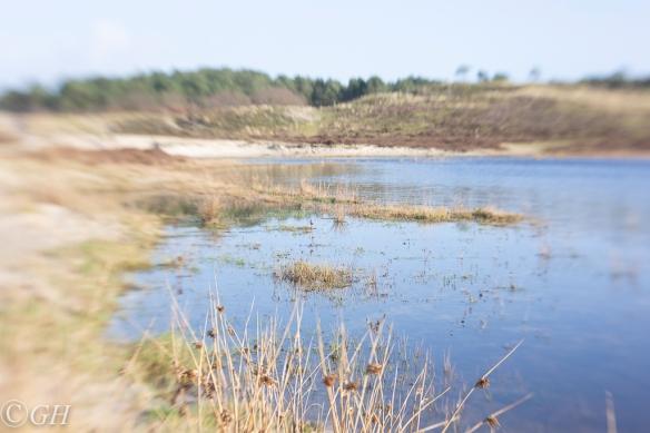 Vogelmeer, Schoorl 19 January 2020
