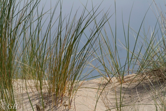 Sand dune plants, 20 May 2020