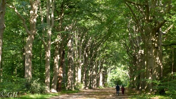 Trees, 8 June 2020