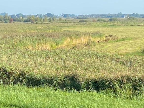 Bittern area, September 2021