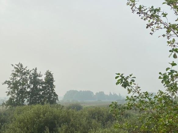 Rottige Meente, September 2021