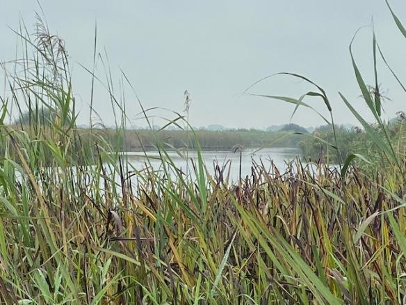 Rottige Meente water, September 2021